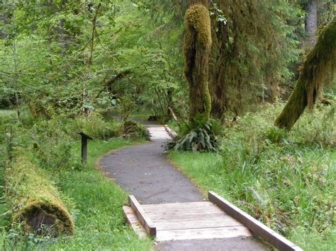 Spruce Trail Hoh Rain Forest Olympic National Park