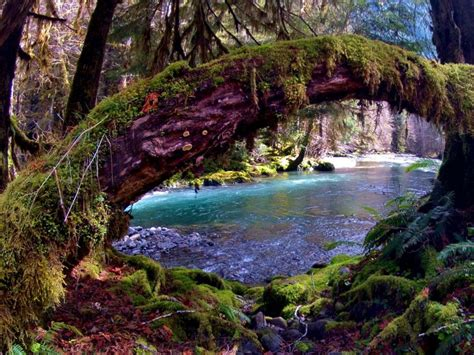 8 Reasons to Explore Olympic National Park
