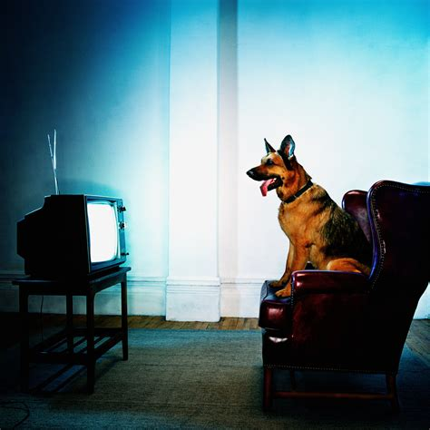 Should Your Dog Be Watching TV?