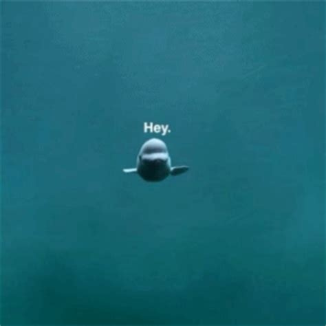 Amazing Animated Dolphin Gifs at Best Animations